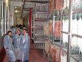Visita a la fabrica de embutidoso